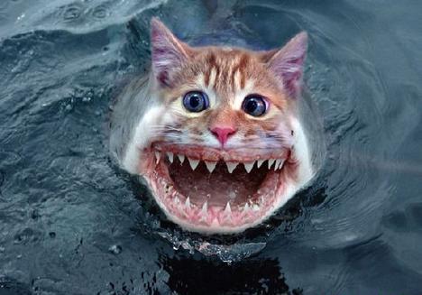 animal morph shark cat.jpg