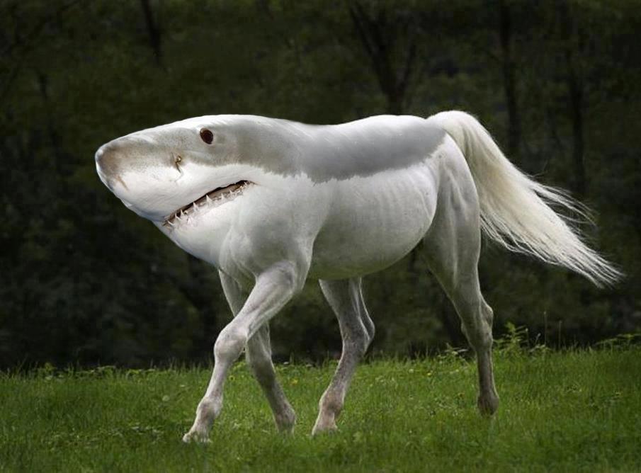 animal morph shark horse.jpg
