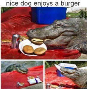 crocodile burger.jpg
